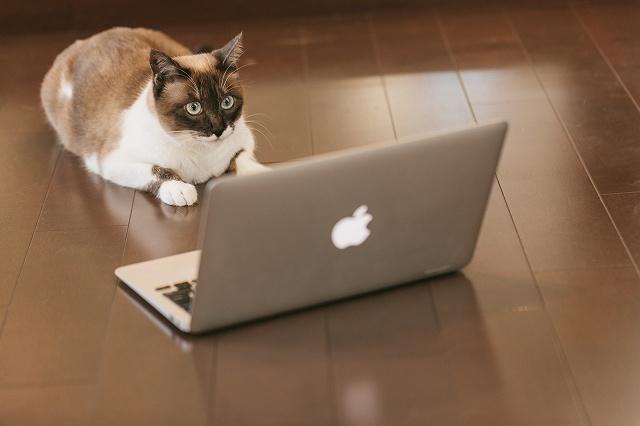 ITを駆使する猫エンジニア